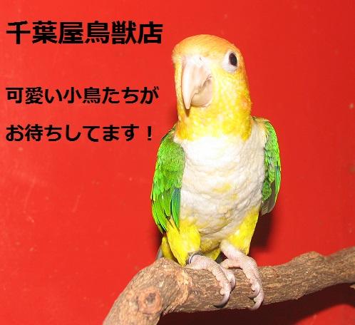 img_20140609-155213.jpg