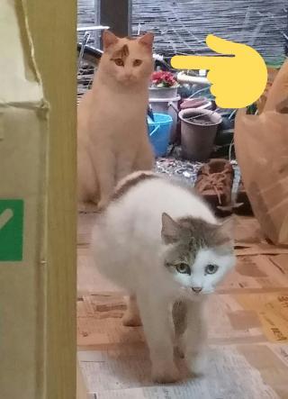 猫探しています画像