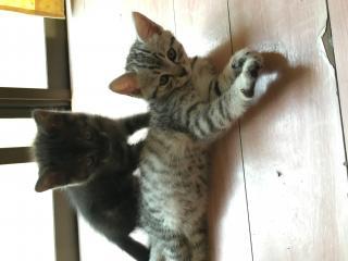 迷子猫探してます!画像