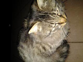 迷い猫?画像