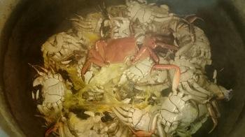 明日は上海蟹スープのホワイトラーメンです。画像