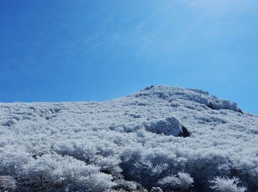 九重冬景色画像